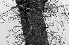Czarny i biały tekstury Zdjęcie Royalty Free