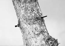 Czarny i biały tekstury Zdjęcia Stock