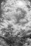 Czarny I Biały Pustynna scena Obraz Royalty Free