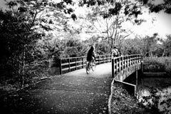 Czarny I Biały rower ścieżki natury zegarka Forest Green świeżego powietrza mosta drzewa drewniana woda Zdjęcie Stock