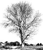 Czarny i biały suchy drzewo Zdjęcia Stock