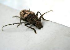 Czarny insekt zdjęcie stock