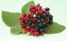 czarny jagody czerwień Fotografia Royalty Free