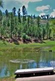 Czarny Jar jezioro, Navajo okręg administracyjny, Arizona, Stany Zjednoczone, Apache Sitegreaves las państwowy zdjęcie royalty free
