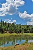 Czarny Jar jezioro, Navajo okręg administracyjny, Arizona, Stany Zjednoczone, Apache Sitegreaves las państwowy zdjęcie stock