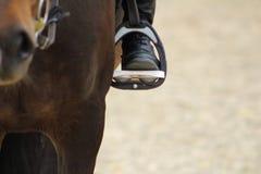 czarny but jeździec w pocięglu dociska na koniu stopa w stirru Zdjęcie Royalty Free