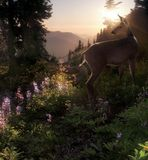 czarny jeleni ogon Zdjęcie Royalty Free