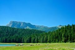 Czarny jezioro w Montenegro Fotografia Royalty Free