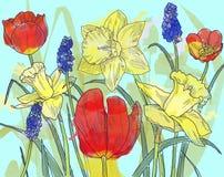 czarny karta barwił kwiecistego kwiatu irysa biel Obraz Royalty Free