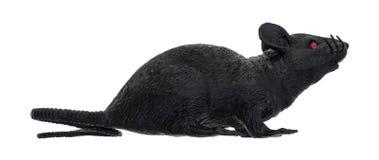 Czarny klingeryt zabawki szczur na białym tle Zdjęcia Stock