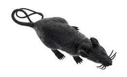 Czarny klingeryt zabawki szczur na białym tle Obrazy Royalty Free
