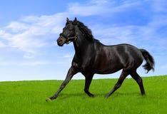 czarny koń Zdjęcie Stock