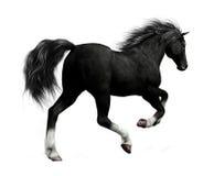 czarny koń Obraz Stock