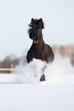 Czarny koń biegający w wintertime Obraz Stock