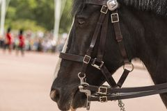 Czarny koń z białą blask pozycją przed pałac buckingham w Londyński UK Zdjęcia Royalty Free