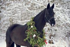Czarny koń z boże narodzenie wiankiem Obraz Stock