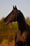 czarny koński zmierzch Zdjęcie Royalty Free