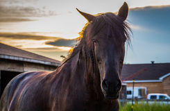 czarny koński zmierzch Obraz Royalty Free