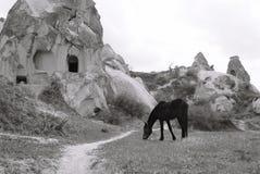 Czarny koń w Turcja Fotografia Stock