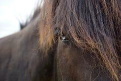 Czarny koń z niebieskimi oczami Zdjęcia Royalty Free