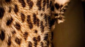 czarny koloru lamparta pomarańczowa bezszwowa skóra Zdjęcia Royalty Free