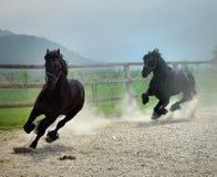 czarny koni uciekać Obrazy Stock