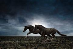 czarny konie dwa zdjęcia royalty free