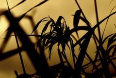 Czarny konturowy ziele Fotografia Royalty Free