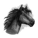 Czarny końskiej głowy nakreślenia portret Obraz Stock