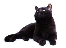 czarny kot Obrazy Stock