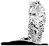 Czarny kot Zdjęcia Stock