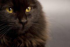 czarny kot Fotografia Stock
