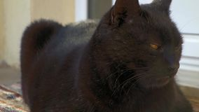 czarny kot zbiory