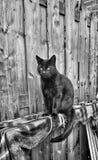 czarny kot Obraz Stock