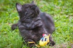 Czarny kot bawić się na trawie Fotografia Royalty Free