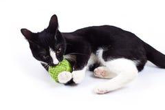 Czarny kot bawić się z zabawką Obrazy Royalty Free
