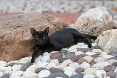 Czarny kot bierze odpoczynek Obrazy Stock