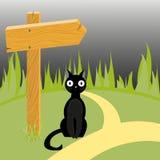 Czarny kot i drewniana strzała na drodze Obraz Stock