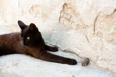Czarny kot i mysz w myśliwym - zdobycza powiązanie Zdjęcie Royalty Free