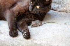 Czarny kot i mysz w myśliwym - zdobycza powiązanie Obrazy Royalty Free