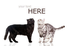 Czarny kot i na biel biały kot. Obrazy Royalty Free