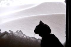 Czarny kot i śnieg Zdjęcia Royalty Free