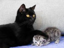Czarny kot i niegrzeczna figlarka Fotografia Stock