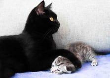 Czarny kot i niegrzeczna figlarka Zdjęcie Stock