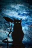 Czarny kot i wrony Fotografia Royalty Free
