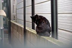 czarny kot jest usytuowanym na kamiennej ścianie, stary ściana z cegieł Obraz Royalty Free
