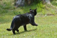 Czarny kot kłama na trawie obraz stock