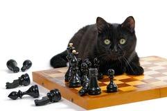 Czarny kot lyiing na chessboard Fotografia Stock