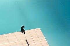 czarny kot marznący blisko basenu dopłynięcia Obraz Royalty Free