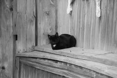 Czarny kot na ławce zdjęcie stock